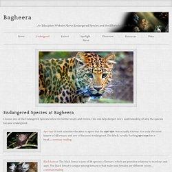 Endangered Species at Bagheera