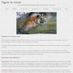 Endangered Tiger Status
