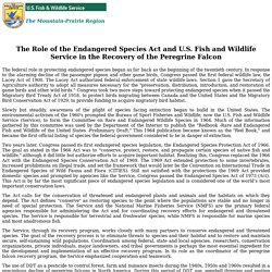 The Role of the Endangered Species Act and U.S. Fish and Wildlife Service in the Recovery of the Peregrine Falcon