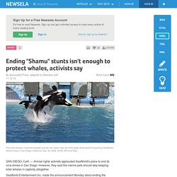 "Ending ""Shamu"" stunts isn't enough to protect whales, activists say"