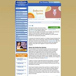 Endocrine System - KidsHealth