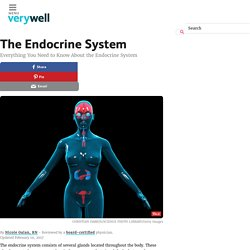 Endocrine System - Everything You Need to Know