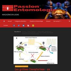 Les grillons Eneopterinae : un groupe modèle pour étudier l'évolution et la communication -