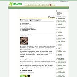 Enfermedad en palmera o palma: amarilleo letal, etc..