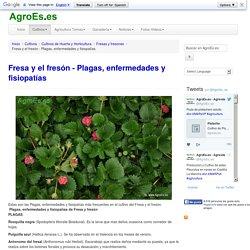 Fresa y el fresón - Plagas, enfermedades y fisiopatías