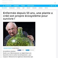 Enfermée depuis 53 ans, une plante a créé son propre écosystème pour survivre !