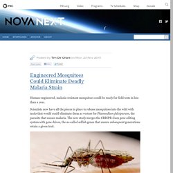 Engineered Mosquitoes Could Eliminate Deadly Malaria Strain — NOVA Next