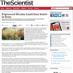 Engineered Microbe Could Ease Switch to Grass