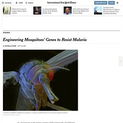 Engineering Mosquitoes' Genes to Resist Malaria