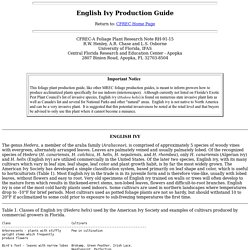 English Ivy Production Guide