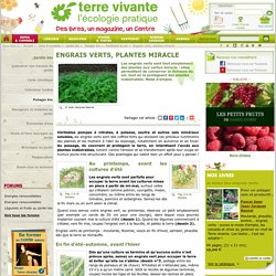 Engrais verts, plantes miracle
