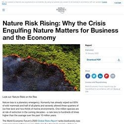 Nature Risk Rising: Why the Crisis Engulfing Nature Matters for Business and the Economy