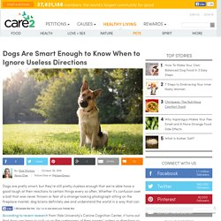 Your Dog Is Smart Enough To Know When To Ignore Useless Directions