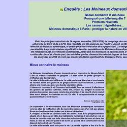 Enquête : Les Moineaux domestiques à Paris