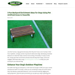 Amazing Yard Enrichment Ideas Using Pet Artificial Grass in Vacaville