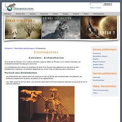 Entelodon. Les Entelodontes. Images. Video