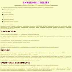01 enterobacteries