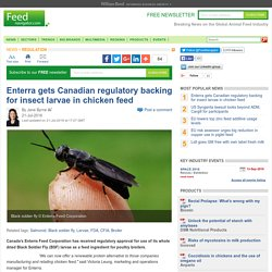 Enterra gets Canadian regulatory backing for insect larvae in chicken feed