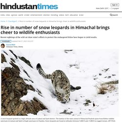 Rise in number of snow leopards in Himachal brings cheer to wildlife enthusiasts - chandigarh - Hindustan Times