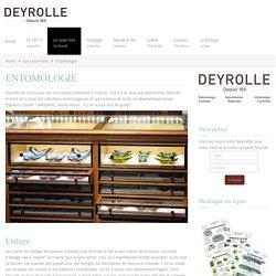 Entomologie - Deyrolle