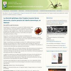 UNIVERSITE DE GEMBLOUX - 2014 - La diversité génétique chez l'espèce invasive Varroa destructor, acarien parasite de l'abeille domestique, en Wallonie Descriptif du sujet de mémoire