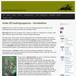 Guide till insektsgrupperna – introduktion