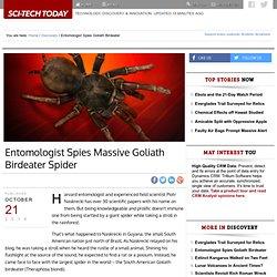 Entomologist Spies Massive Goliath Birdeater Spider