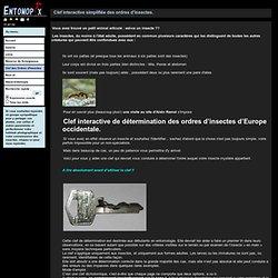 Photos d'insectes de Belgique et de France - Les réponses aux FAQ sur les insectes et leur identification