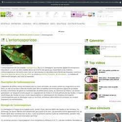 L'entomosporiose : Lutte, traitement et remède biologique