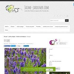 Hysope : Semer, planter, diviser, entretenir et déguster Jaime-jardiner.com