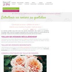 Entretenir ses rosiers au quotidien - Roses Guillot
