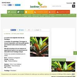 Croton : entretien, arrosage, maladies