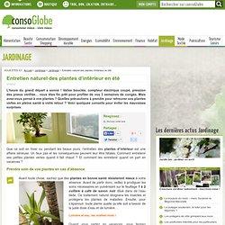 Entretien naturel des plantes d'intérieur en été