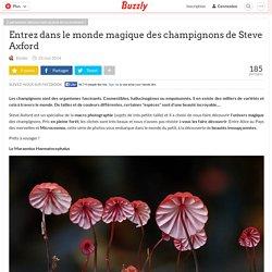 Entrez dans le monde magique des champignons de Steve Axford