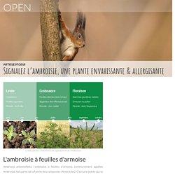 Signalez l'ambroisie, une plante envahissante & allergisante, actualité – portail OPEN