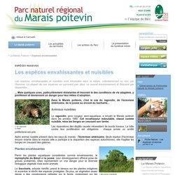 Espèces envahissantes - Le Marais Poitevin - Parc naturel régional du Marais poitevin