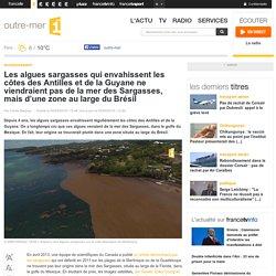 Les algues sargasses qui envahissent les côtes des Antilles et de la Guyane ne viendraient pas de la mer des Sargasses, mais d'une zone au large du Brésil
