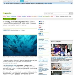 Warning over endangered tuna trade | Environment