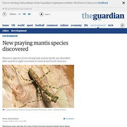 New praying mantis species discovered