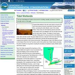 Tidal Wetlands