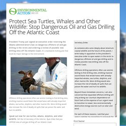 Environmental Action Protect Sea Turtles, Whales and Other Wildlife: Stop Dangerous Oil and Gas Drilling Off the Atlantic Coast