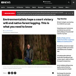 Environmentalists hope a court victory will end native forest logging. This is what you need to know - ABC News