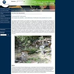 Institut écologie et environnement - Actualités de l'institut