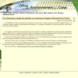 OFFICE DE L ENVIRONNEMENT DE LA CORSE - Le charançon rouge du palmier, un nouveau ravageur découvert en Corse