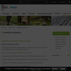 Unité de Recherche Abeilles et Environnement - Collections d'abeilles