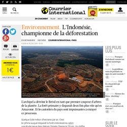 L'Indonésie, championne de la déforestation