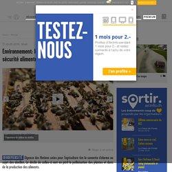 Environnement: la disparition des abeilles menace la...