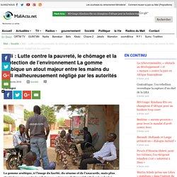 Lutte contre la pauvreté, le chômage et la protection de l'environnement La gomme arabique un atout majeur entre les mains du Mali malheureusement négligé par les autorités