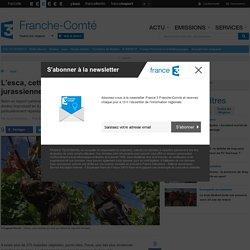 FRANCE 3 FRANCHE COMTE 30/07/15 L'esca, cette épidémie qui détruit les vignes jurassiennes