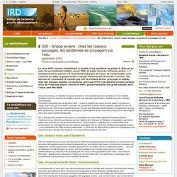 IRD SEPT 2009 Grippe aviaire : chez les oiseaux sauvages, les épidémies se propagent via l'eau